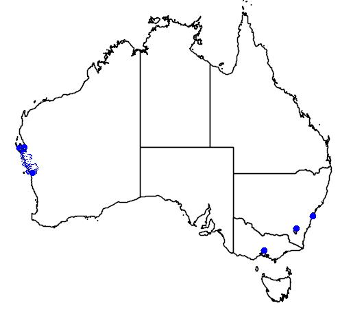 distribution map showing range of Banksia sceptrum in Australia