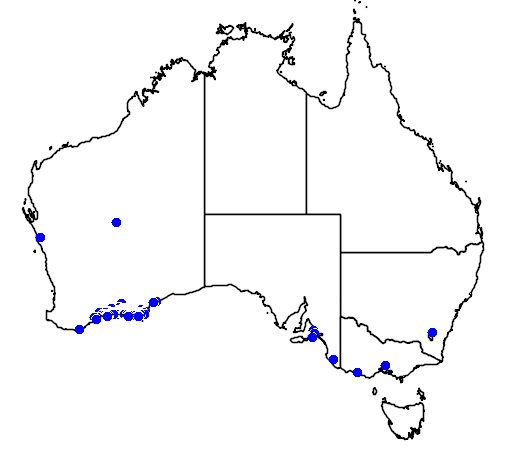 distribution map showing range of Banksia speciosa in Australia