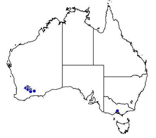 distribution map showing range of Banksia sphaerocarpa in Australia