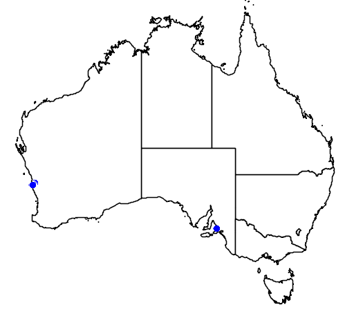 distribution map showing range of Banksia tricuspis in Australia