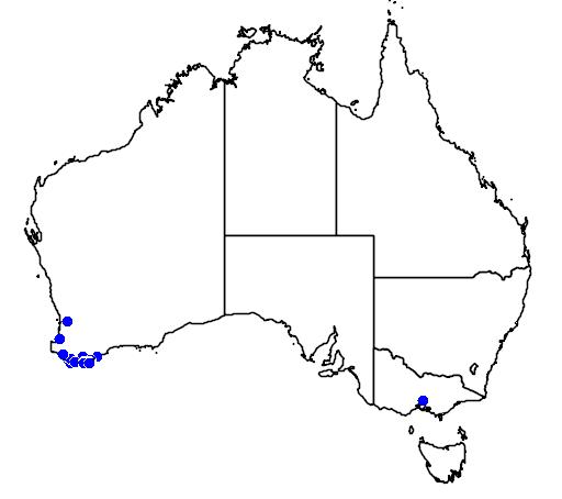 distribution map showing range of Banksia verticillata in Australia