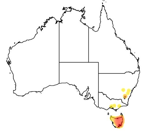 distribution map showing range of Bettongia gaimardi in Australia