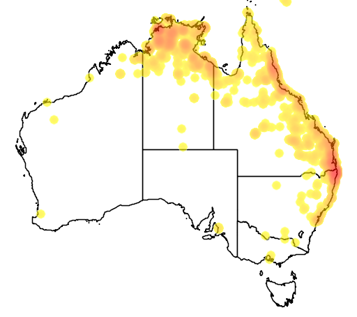 distribution map showing range of Bufo marinus in Australia