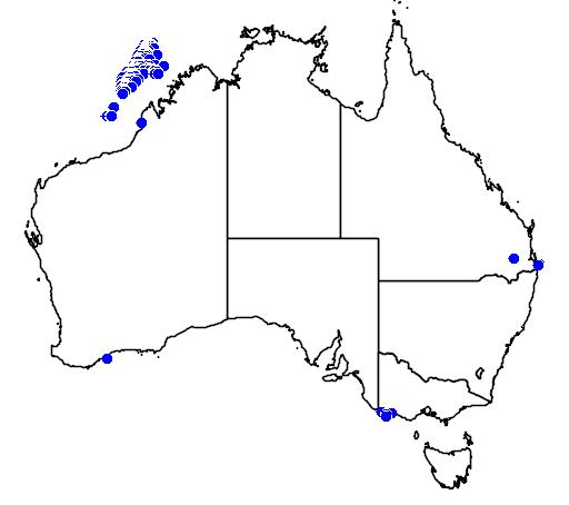 distribution map showing range of Bulweria bulwerii in Australia