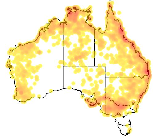 distribution map showing range of Burhinus grallarius in Australia