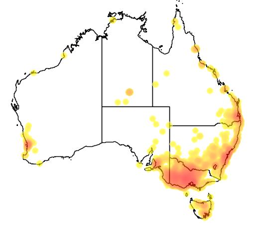distribution map showing range of Cacatua tenuirostris in Australia