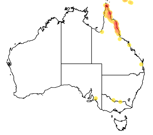 distribution map showing range of Cacomantis castaneiventris in Australia