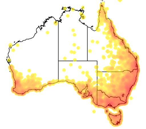 distribution map showing range of Cacomantis flabelliformis in Australia