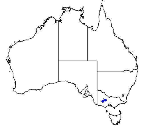 distribution map showing range of Caladenia ampla in Australia