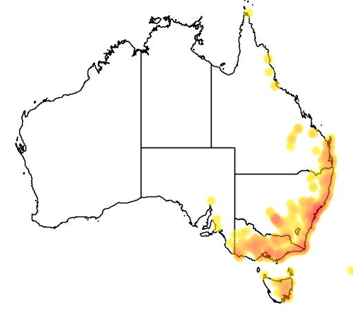 distribution map showing range of Caladenia catenata in Australia
