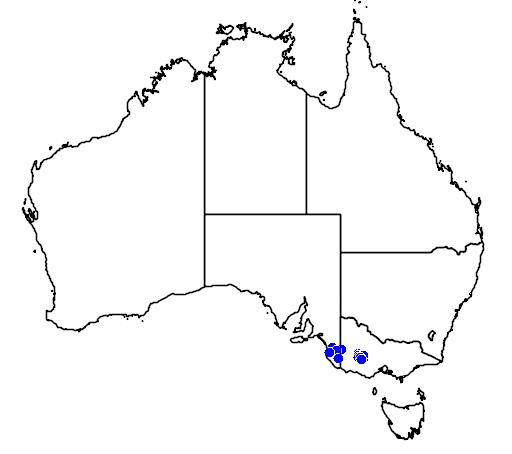 distribution map showing range of Caladenia fulva in Australia