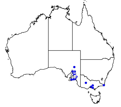 distribution map showing range of Caladenia leptochila in Australia
