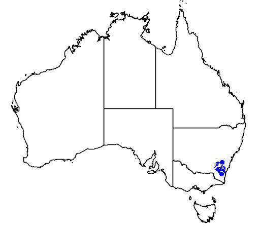 distribution map showing range of Caladenia ustulata in Australia