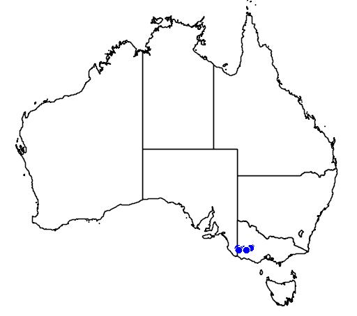 distribution map showing range of Caladenia villosissima in Australia