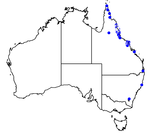 distribution map showing range of Calamus australis in Australia