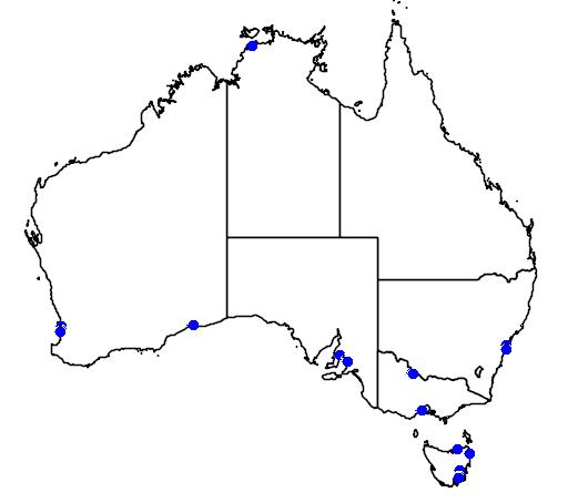 distribution map showing range of Calidris bairdii in Australia