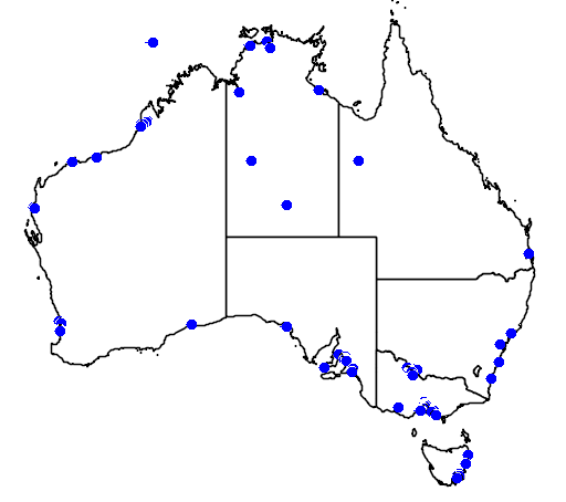 distribution map showing range of Calidris minuta in Australia
