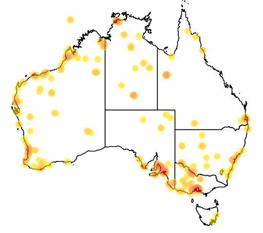 distribution map showing range of Calidris subminuta in Australia