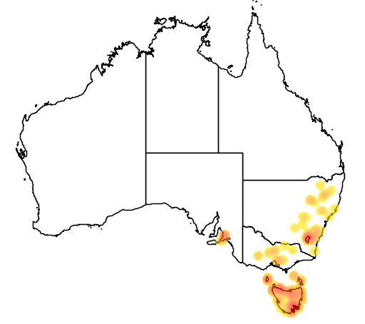 distribution map showing range of Calochilus platychilus in Australia