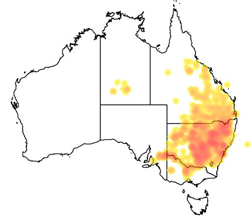 distribution map showing range of Calotis cuneifolia in Australia