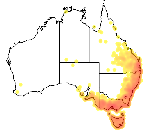 distribution map showing range of Calyptorhynchus funereus in Australia