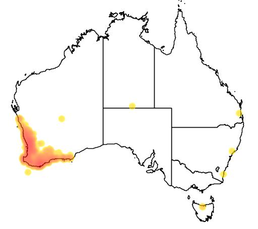 distribution map showing range of Calyptorhynchus latirostris in Australia