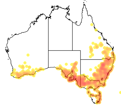 distribution map showing range of Calytrix sullivanii in Australia