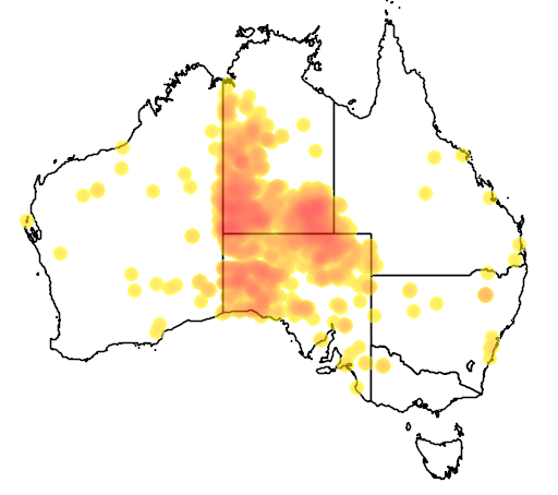 distribution map showing range of Camelus dromedarius in Australia