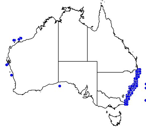 Caprodon longimanus
