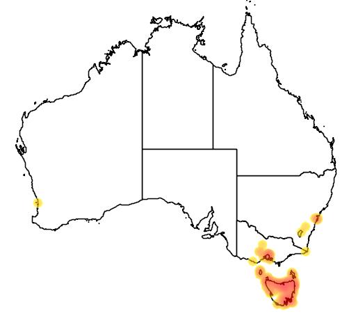 distribution map showing range of Carduelis chloris in Australia