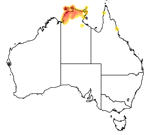 distribution map showing range of Carpentaria acuminata in Australia