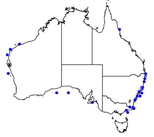 Cepola australis