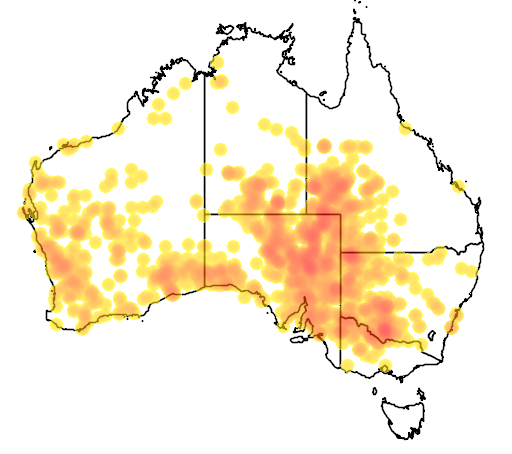 distribution map showing range of Charadrius australis in Australia