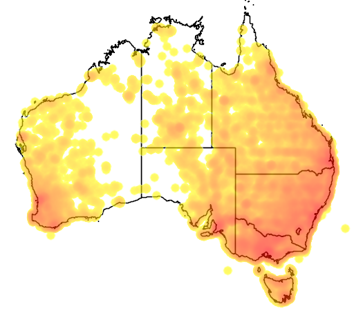 distribution map showing range of Chenonetta jubata in Australia
