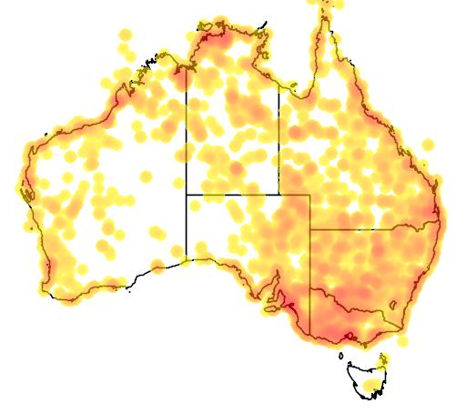 distribution map showing range of Chlidonias hybridus in Australia