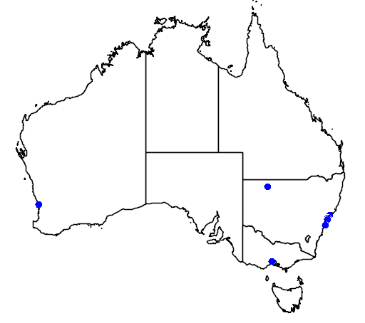 distribution map showing range of Chlidonias niger in Australia
