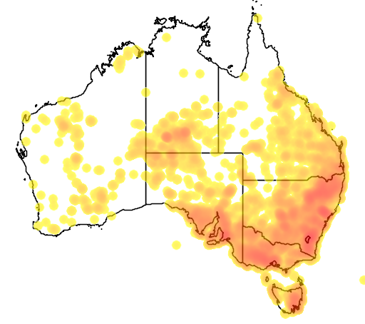 distribution map showing range of Chrysocephalum apiculatum in Australia