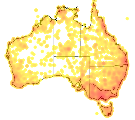 distribution map showing range of Chrysococcyx basalis in Australia