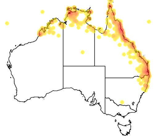 distribution map showing range of Chrysococcyx minutillus in Australia