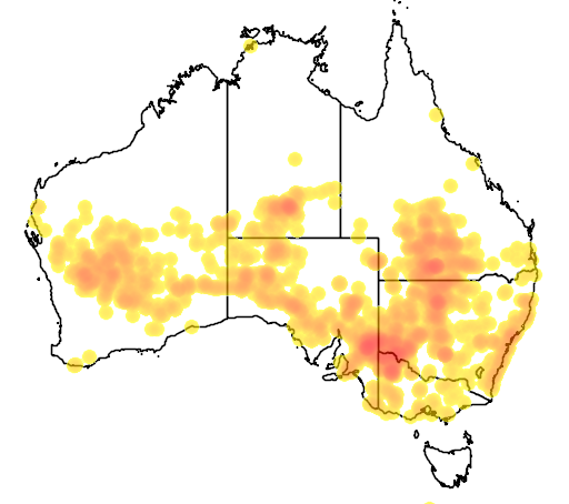 distribution map showing range of Climacteris affinis in Australia