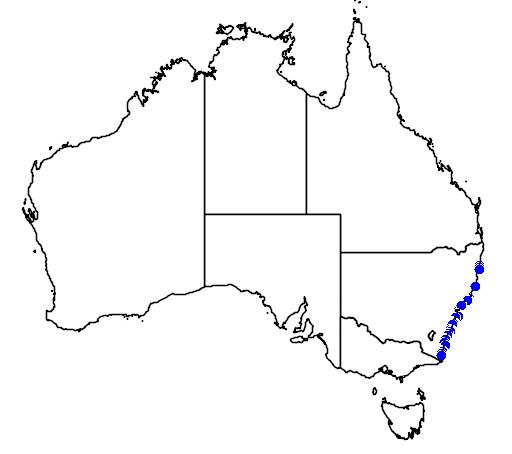 Cochleoceps orientalis
