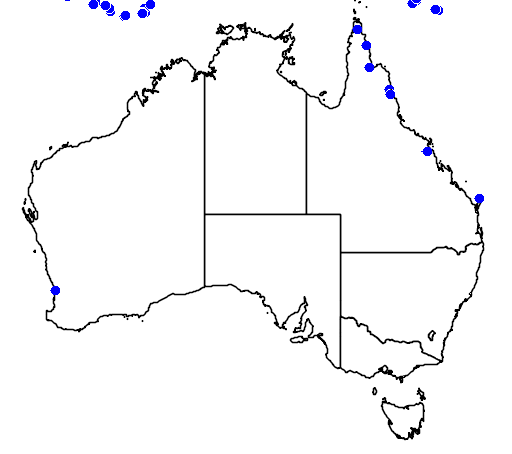 distribution map showing range of Collocalia esculenta in Australia