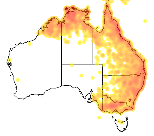 distribution map showing range of Coracina papuensis in Australia