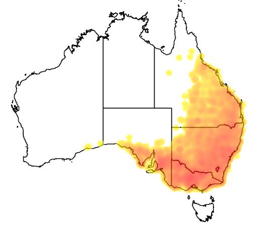 distribution map showing range of Corcorax melanorhamphos in Australia