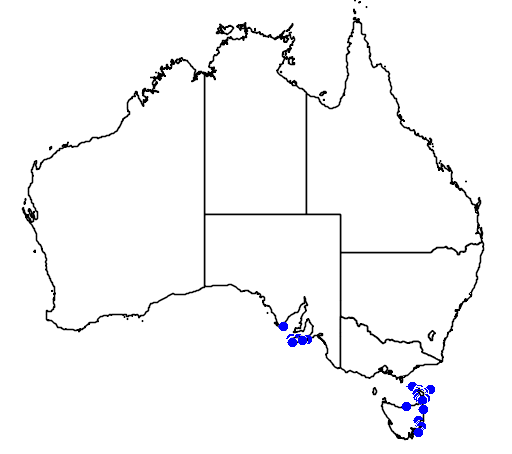 distribution map showing range of Correa reflexa in Australia