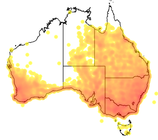 distribution map showing range of Corvus coronoides in Australia