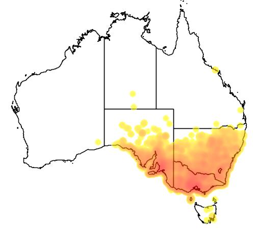 distribution map showing range of Corvus mellori in Australia