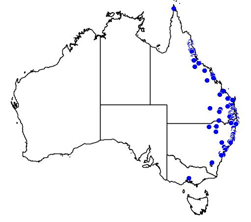 distribution map showing range of Corymbia torelliana in Australia