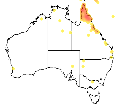 distribution map showing range of Cracticus mentalis in Australia