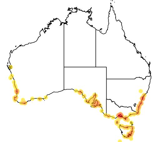 Cristiceps australis